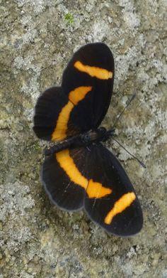 Mariposa en la roca