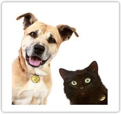 Facts and Myths about Fleas and Ticks - Fleas and ticks can pose a ...