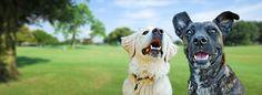 Dog Training Expert in Houston