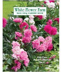 75 best src free gardening seed catalogs images on pinterest white flower farm the premier american source for plants shrubs bulbs and mightylinksfo