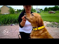 Why a Martingale collar is suggested to help prevent lost dogs, and how to properly fit it on your dog.