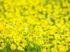 yellow flowers  flores amarillas