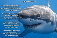 Poem dedicated to Cal Ripfin, my favorite shark. Where have you gone?:(