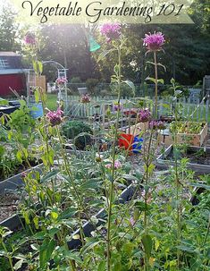 The Basics Of Planning Your Vegetable Garden