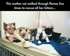 A mother's love is the strongest kind of love there is.