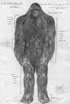 Bigfoot: California informant sketch of bigfoot 1987....