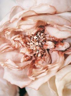 blush flower ❤