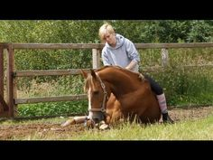 How to lay down your horse without ropes pnrl