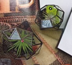 Diamond Terrariums - I want these so bad! http://www.mooreaseal.com/collections/planters-terrariums