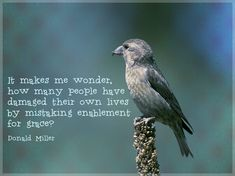 "picture of bird on bird feeder with quote: ""It makes me wonder how many people…"