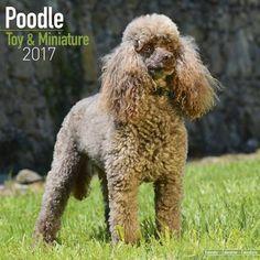 Avonside Hunde-Kalender 2017Avonside Hunde Wandkalender 2017: Poodle - Pudel (Toy & Miniature)