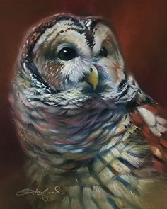 Barred Owl by Walter Stanford Pastel ~ x