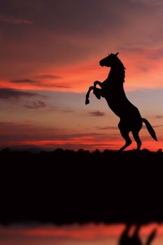 Horse silhouette rearing up in pink and orange soft sunset glow. Pretty Horses, Horse Love, Beautiful Horses, Animals Beautiful, Cavalo Wallpaper, Animals And Pets, Cute Animals, Horse Silhouette, Sunset Silhouette