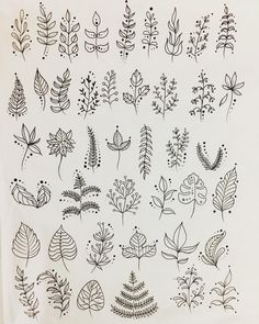 Flora drawing designs leaves leafs vegetation
