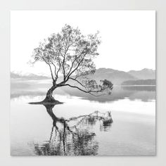 Wanaka Tree New Zealand Nature Photograph Black And White Canvas Print Black And White Posters, Black And White Canvas, White Art, White Wood, Small Canvas Prints, Wall Prints, Canvas Wall Art, Poster Prints, Tree Canvas