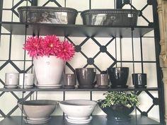 Macetas de todos los tamaños y colores! Para tu espacio favorito #macetas #jardín #plantas #decoración