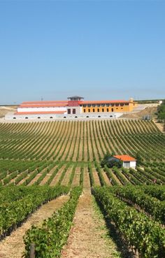 Campolargo family has been working in viniculture and wine growing for several generations. We currently farm over 170 hectares divided into two properties in central Portugal: Quinta de S. Mateus and Quinta de Vale d' Azar. #wine #winelovers  | Vist: http://www.campolargovinhos.com/