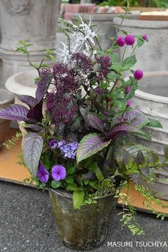 Container Plants, Container Gardening, Lakeside Garden, Cinder Block Garden, Unique Plants, Foliage Plants, Types Of Plants, Amazing Gardens, Floral Arrangements