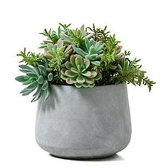 Bring the outdoors inside with our premium designer faux plants, potted plants, planters & plant stands. See our range at Adairs Online or visit one of our stores.