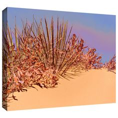 'Coral Dunes Noon' by Dean Uhlinger Photographic Print Gallery-Wrapped on Canvas