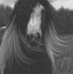 Great pictures of horses! (75 photos) - Izismile.com