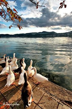 Lake Kastoria or Lake Orestida a lake in the Kastoria regional unit of Macedonia, northwestern Greece. ~ photo by Argiris Zafeiridis Myconos, Places In Europe, Thessaloniki, What A Wonderful World, Ancient Greece, Greece Travel, Countries Of The World, Crete, Greek Islands