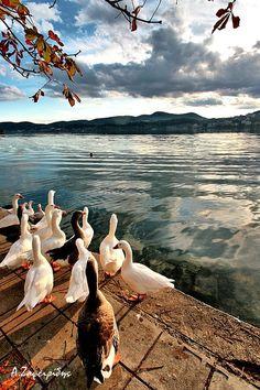 This is my Greece | Lake Kastoria or Lake Orestida a lake in the Kastoria regional unit of Macedonia, northwestern Greece.