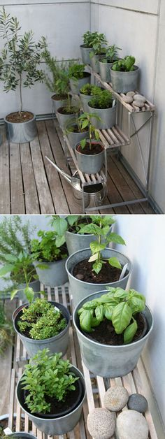 DIY HERB GARDEN :: Brilliant little terraced setup. Simple yet visually appealing. She kept the herbs in the original plastic pots, but put them in the galvanized cache pots for the lovely aesthetic. On the left appears to be an olive tree and a small citrus tree in the foremost pot. You could replicate a similar look with a (vintage) wood shoe rack. balcony gardening, windowsill gardening