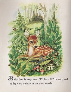 """Baby Deer    From """"Animal Babies,"""" written by Kathryn and Byron Jackson with illustrations by Adele Werber, Little Golden Books, Simon and Schuster, NY, 1947.    I love this sweet fawn, and the   scrollwork font used on the letter """"B.""""    Many of the pages in this copy have been colored on with crayon, pen and pencil by """"BABYLION THE BUSY,"""" which is scrawled in a childish hand inside the front cover (I'll have to scan it!). Still, it's a lovely little find."""