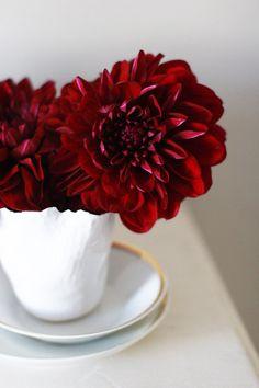 love red flowers in winter
