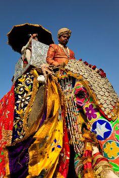 Annual Jaipur Elephant Festival