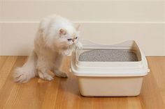 Peeing outside of the litter box is a common problem for cat owners, and the solution is in this website.