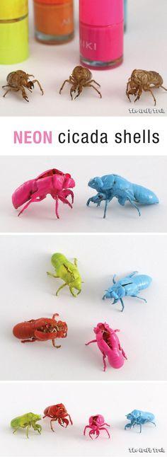 Neon cicada shells