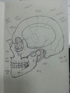두개골 측면(3/13)