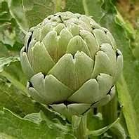 Castroville, CA ~ the Artichoke Capital of the world...