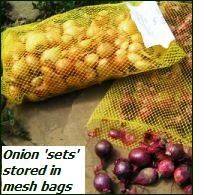 grow onions – onion sets in mesh bags
