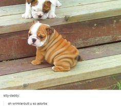 tumblrs-greatest-hits-wrinkle-butt-dog