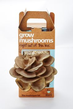 Growing mushrooms at home has never been easier. Mushroom growing kit that grows right out of the box. Start your mushroom garden today. Edible Mushrooms, Stuffed Mushrooms, Mushroom Grow Kit, Diy Gifts, Best Gifts, Do It Yourself Kit, Growing Mushrooms, Diy Christmas Gifts, Christmas Things