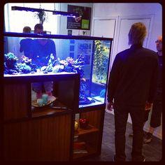 #lounge #summertime #aquaculture #saltwater @akvarieleasingab #fishtank #interiordesign #inspiration #sun #blue #biophilia #biology #water by nordicgreendesign