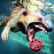Hilariously ferocious underwater dog... I'm amused.
