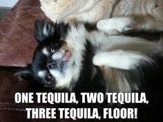Cece the Tequila dog. http://cecethetequiladog.blogspot.com