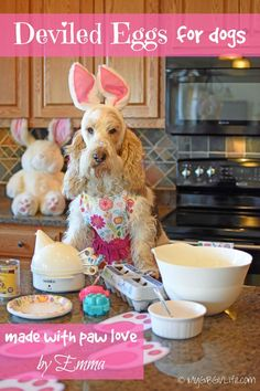 My GBGV LIfe | why not make some deviled eggs for your dog this Easter with our simple recipe?