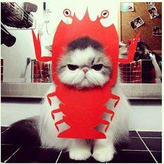 Lobster? Cat?