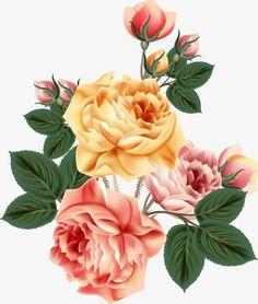 Vector Flowers, Botanical Flowers, Flower Backgrounds, Flower Wallpaper, Peony Flower, Flower Art, Fruit Painting, Vintage Botanical Prints, Birth Flowers