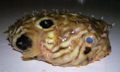 The deep sea fisherman found another crazy fish