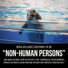 Yay India!  Although I did enjoy my dolphin swim in Tortuga, in their own huge bay, it was still caged/netted off from the free ocean where the dolphins would have lived & roamed freely.  I'd like to swim freely with wild dolphins sometime, like the pods that live off the Keys.