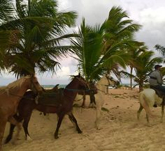 The Horses at the Hard Rock Hotel Punta Cana