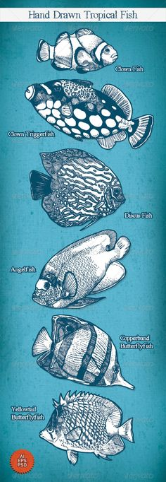 Hand Drawn Tropical Fish  #GraphicRiver         A set of six hand drawn tropical fish. Scalable to any size. Eps and Ai files included, plus a psd file for those who aren't using Adobe Illustrator. Free font also available.  	 Species depicted:   Clown Fish  Clown Triggerfish  Discus Fish  Angelfish  Copperband Butterflyfish  Yellowtail Butterflyfish