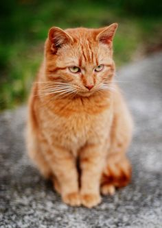 """""""In my world, the grass is green, the sky is blue and all cats are orange."""" --Jim Davis, Creator of """"Garfield"""""""