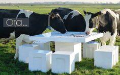 des vaches remarquables
